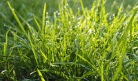 Grass or meadow background, natural header or banner