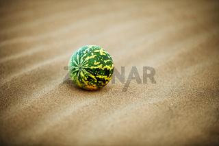 Desert melon (Citrullus colocynthis) on sand