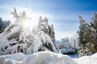 A21_0308_winter_ueberlingen
