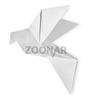 Bird paper isolated