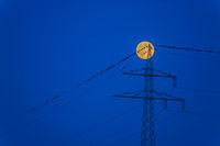 Vögel und Mond