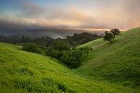 Foggy Sunset over California Meadow