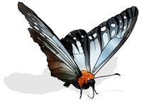 The Freak Butterfly