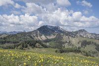 Hahnenfußwiese im Gebirge