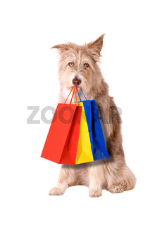 Dog with shopping bags isolated on white background