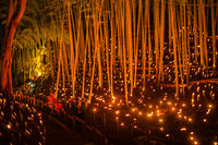 Bamboo forest light up (small desk Castle forest of citizen)