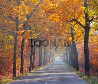 Allee im Herbst - avenue in fall 26