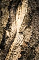 old tree bark stylized antique photos