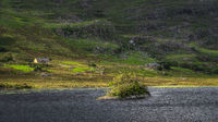 Small rocky island covered in twisted trees on Lough Gummeenduff, Ring of Kerry