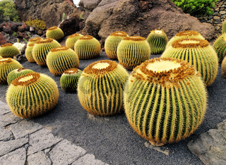 Cactus Garden on Lanzarote