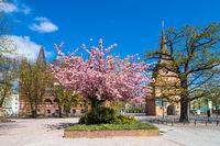 Das Steintor und das Ständehaus in der Hansestadt Rostock im Frühling