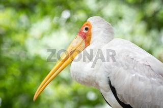 Serious bird profile