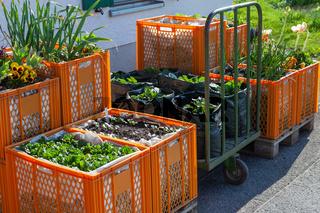 Blumen - und Gemüsebeete