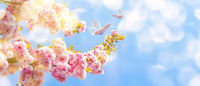 Beautiful sakura flower blooming tree, butterflies on light sky background. Shallow depth. Soft pastel pink toned. Spring nature. Springtime cherry blossom panorama. Copy space banner.