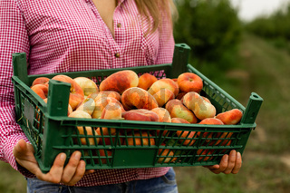 Young woman buying fresh fruits at local farm