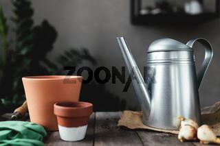 Ceramic pots on old gray wooden table, tulip bulbs, can, gloves, garden shovel