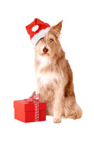 Dog with santa hat and gift isolated