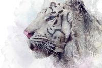 White tiger  illustration on white background