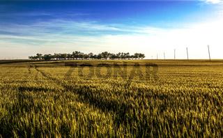 Fields landscape