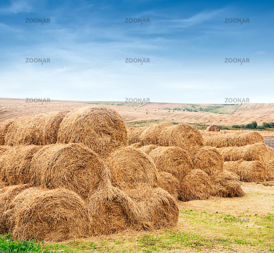 farm field with gathered crops