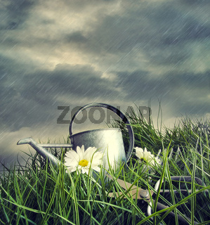 Watering can with flowers in a summer rain