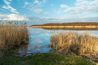 Reeds on the shore of the lake and the beautiful sky, Stankow, Poland