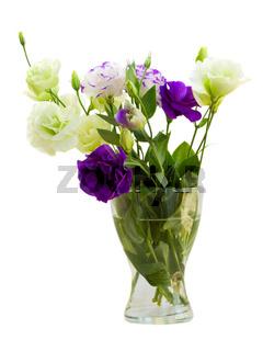 Eustomaflowers in vase