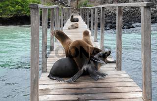 Willkommen auf Galapagos