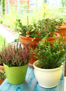 Outdoor flower pots for small garden