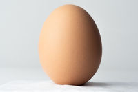 Easter egg standing on a cotton ball and on white background