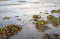 Green and red seaweed were thrown onto the beach by the waves