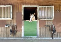 a horse in the stables of a manege
