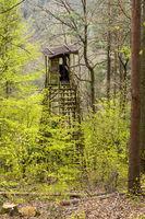 Jägerhochsitz an einem Berghang im Frühling mit Kiefern und Laubbäumen