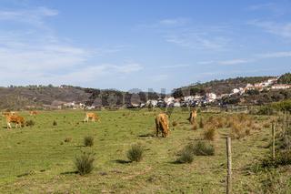 Odeceixe mit Pferden auf der Weide, Algarve, Portugal