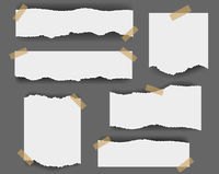 Ripped paper Isolated Grey Background