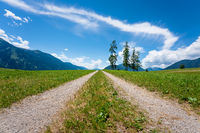 Path through alpine mountain meadow with five large larch trees during sunny summer day in Mieming, Tirol, Austria