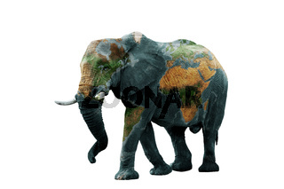 Isolated image of elephant with earth painted on skin.