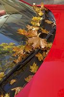 Herbstblätter auf Windschutzscheibe