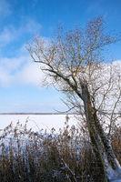 Schneelandschaft mit Bäumen an einem See bei Magdeburg