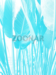 Spring floral background with growing Anthurium leaves shaded in bright light blue color
