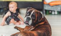 bulldog with children in background.