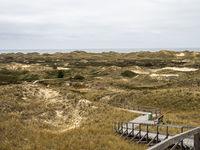 Sand dune landscape overgrown with grass on the island of Amrum, Germany. Siatler or Setzer Dune