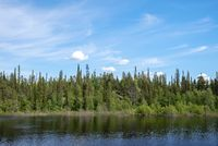 Small river in boreal forest on a sunny day