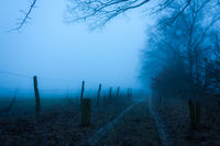 Pfad im Nebel