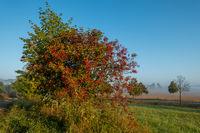 Herbstlandschaft im Harz