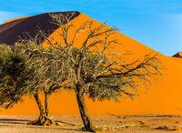 Trees in a vast desert