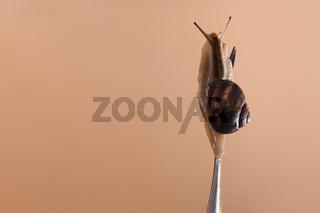live snail on a fork close-up. mock up