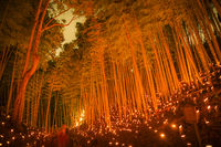 Bamboo forest light up the (small desk Castle forest of citizen)
