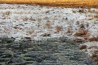 Reif am großen Arbersee