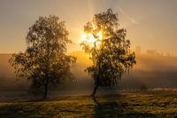 Lichtstimmung Sonnenaufgang in Nebelstimmung Baumgruppe